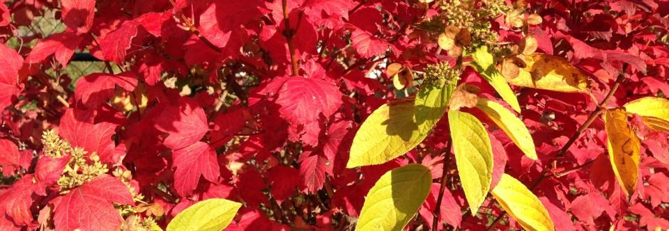 Herbst, Sonne, Blätter,…