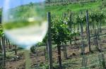 Weinbauern